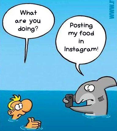 Instagram Shark