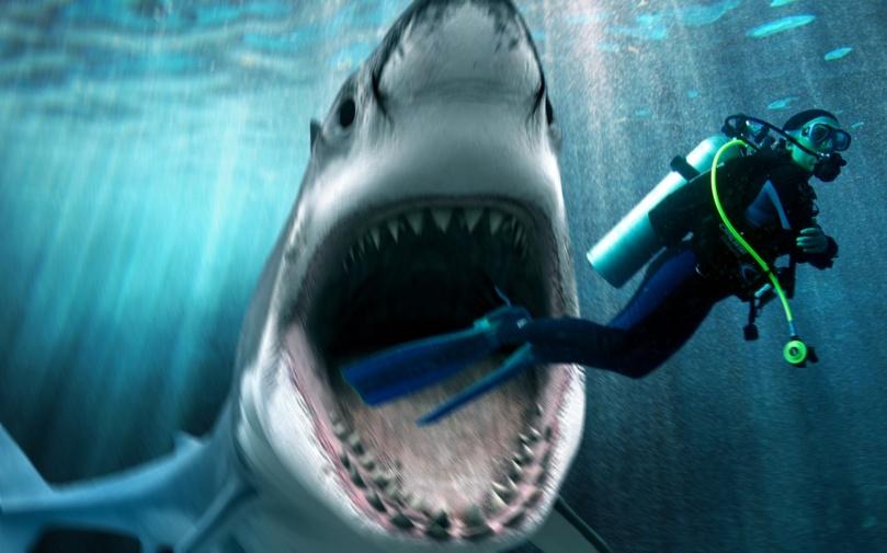 Shark Attack Post